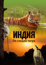 Индия: По следам тигра