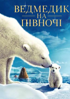 Ведмедик на півночі