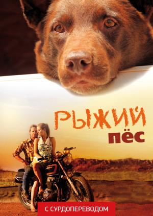 Рыжий пес (Сурдоперевод)